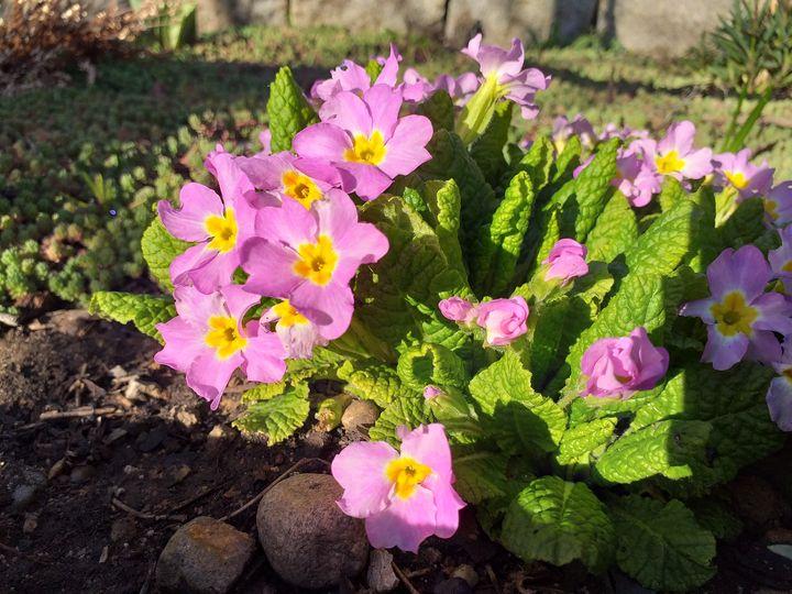 Flower 23 - Anna
