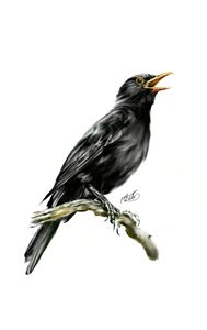 Blackbird In Oil