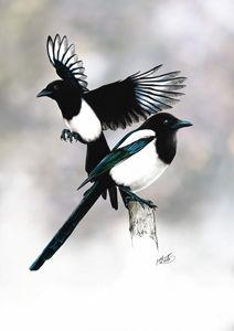 Two For Joy. Magpies.
