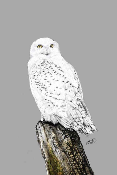 Snowy Owl - Mark Collins Art