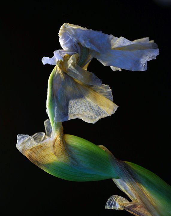 Running bride - Flowers