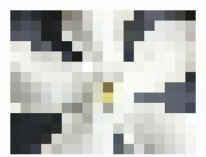 White Cerbera odollam - Bruco Designs