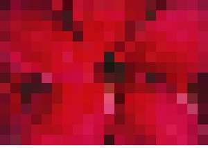 Red Frangipani - Bruco Designs