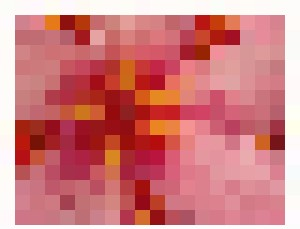 Pink Frangipani - Bruco Designs