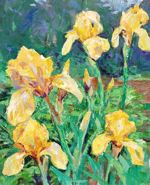 Yellow Iris - Meredith Wood