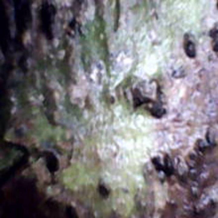 Bark XLIV - 480558 plus Photography