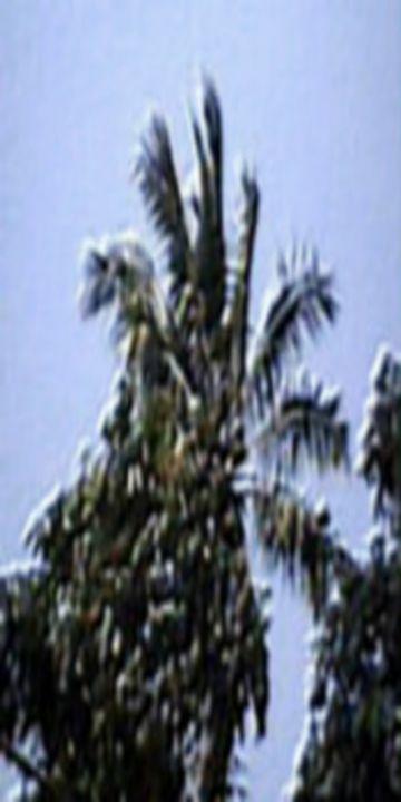 PASANGGRAHAN: Coconut weaving - 480558 plus Photography