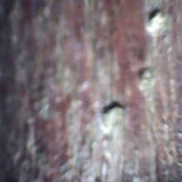 Bark XXVIII - 480558 plus Photography