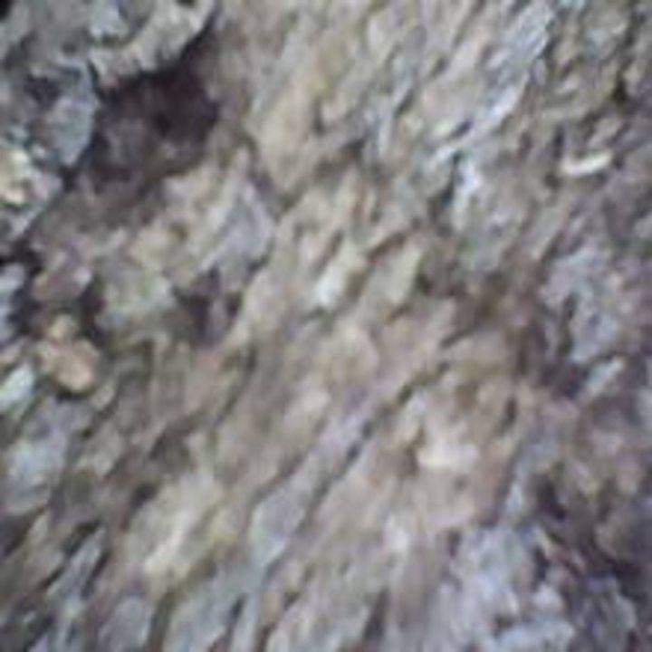 Bark VIII - 480558 plus Photography