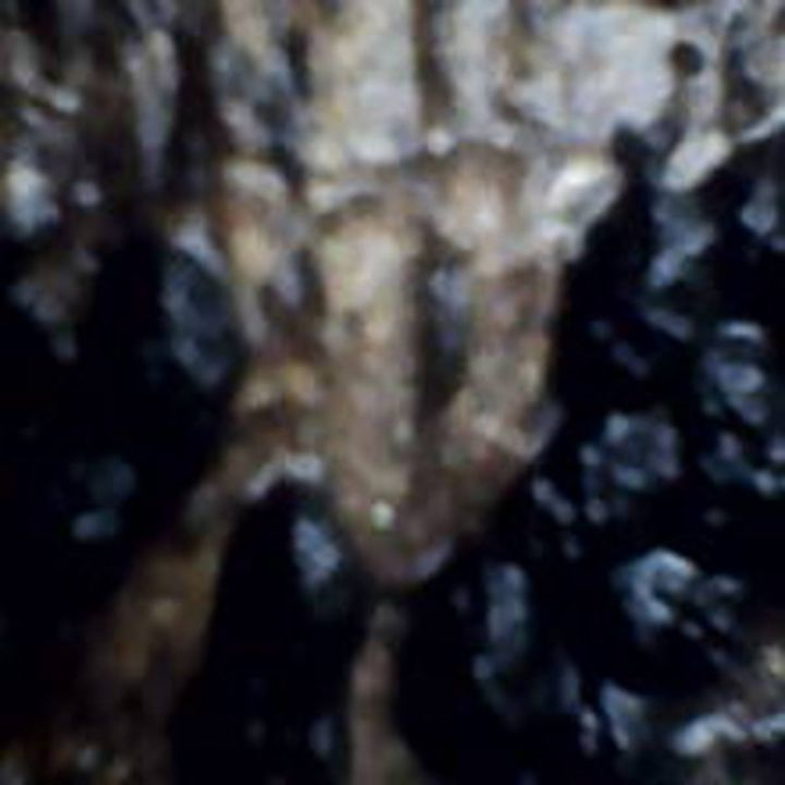 Bark XXII - 480558 plus Photography