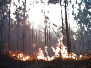 Diffuse Fire