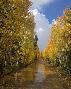 Fall on the Kaibab
