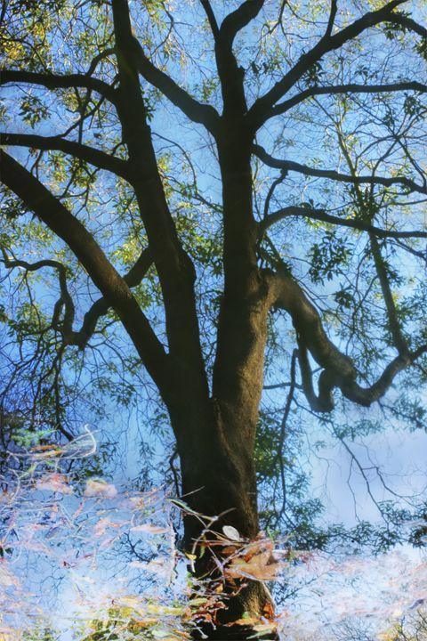 Mirror Water - Daniel Holmes