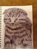 Original kitten drawing