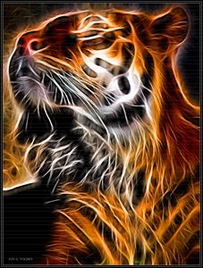 A Glowing Tiger