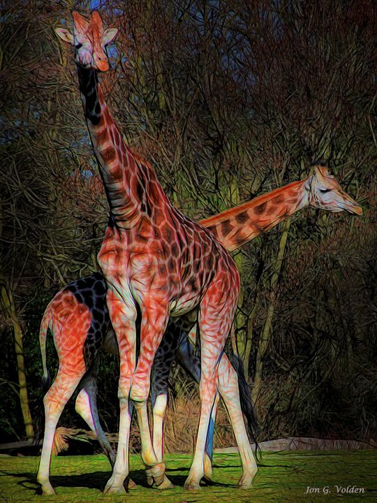 Impression Of A Pair Of Giraffes - DunJon Fantasy Art