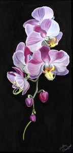 77770_HANGING_ORCHIDS2, 04/06/19, 8: