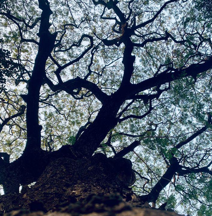 Tree - Cromulent