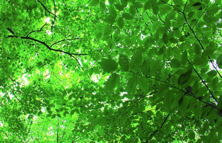Leaf Love - Isaac Stearns