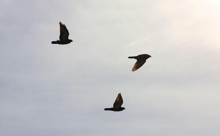 Three Little Birds - Isaac Stearns