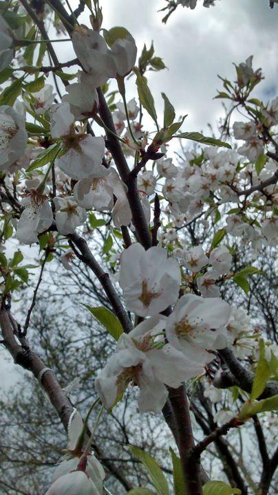 White blooms - redlightdarkroom