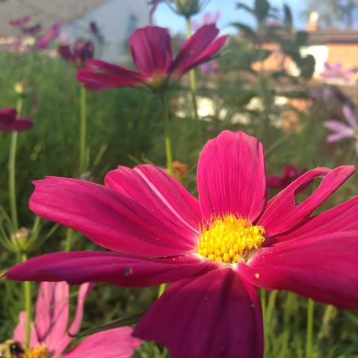 Summer Flower - redlightdarkroom