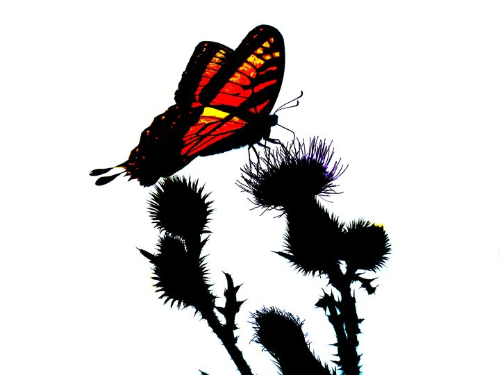 Abstract Butterfly - Bethany Lee Photography