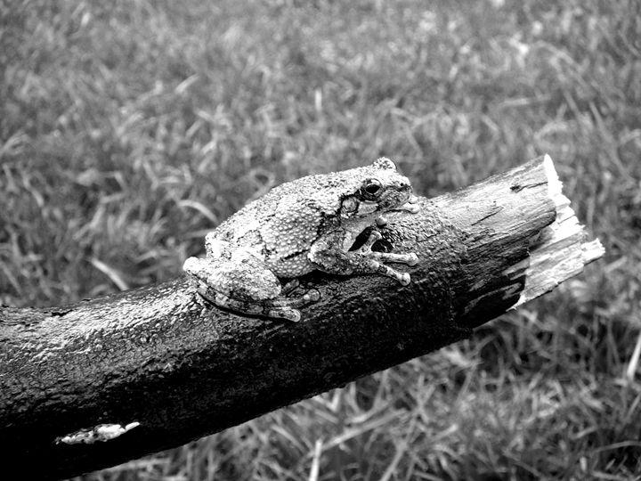 Frog - Bethany Lee Photography