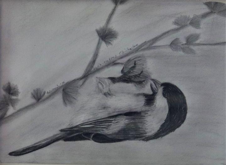 Black-Capped Chickadee - Wild Bird Art Gallery