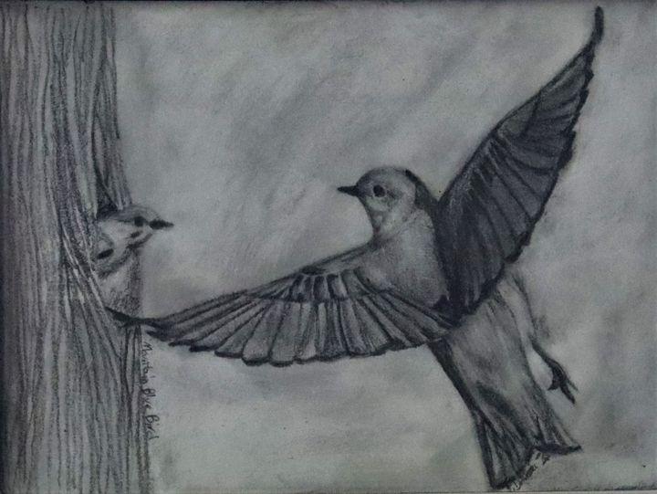 Mountain Bluebird - Wild Bird Art Gallery