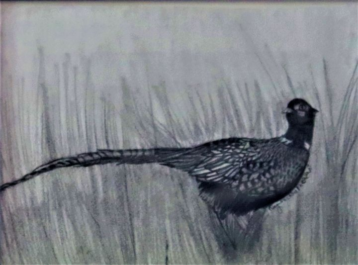 Ring-Necked Pheasant - Wild Bird Art Gallery