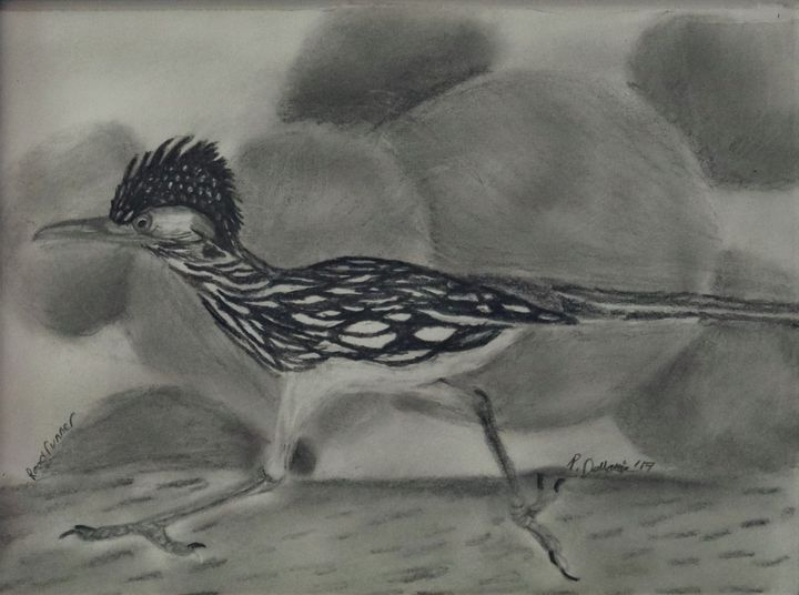 Roadrunner - Wild Bird Art Gallery