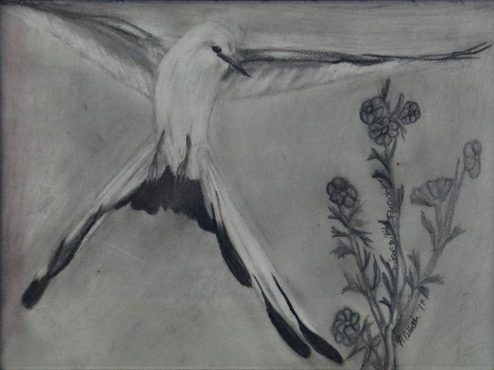 Scissor-Tailed Flycatcher - Wild Bird Art Gallery