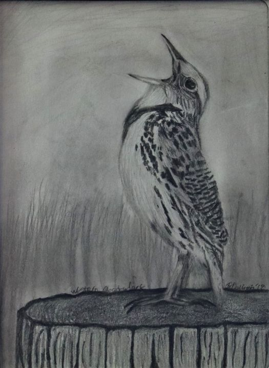 Western Meadowlark - Wild Bird Art Gallery