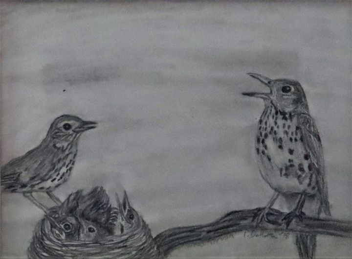 Wood Thrush - Wild Bird Art Gallery