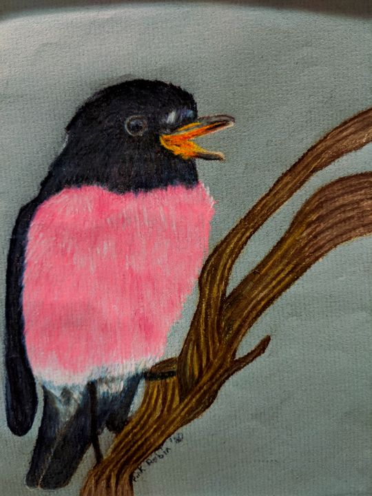 Pink Robin - Wild Bird Art Gallery