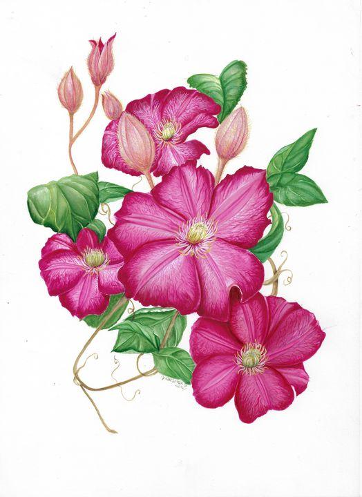 botanical clematis motana - Gillian McIntosh