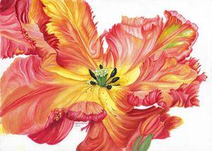Botanical Parrot tulip