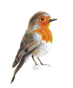 Robin red breast in watercolours