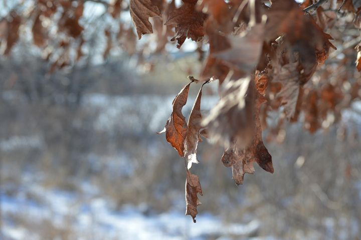 Clinging Leaf - Art by Indigo