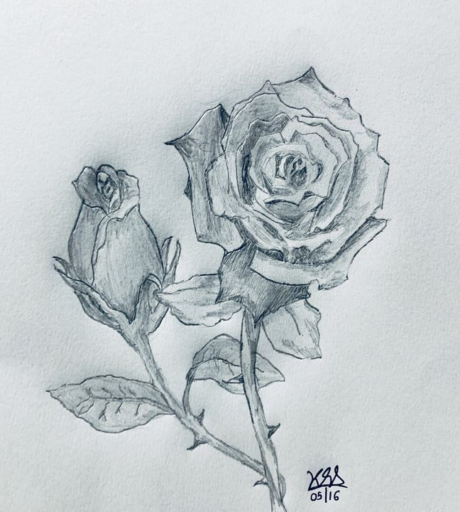 Pencil sketch of a rose - Pencil Drawings