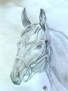 Pencil art of horse
