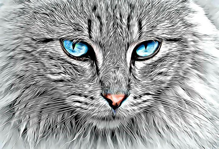 Feline Blue - Brondre4601