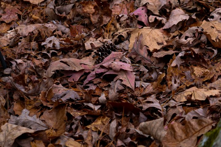 leaves - Preus Photography