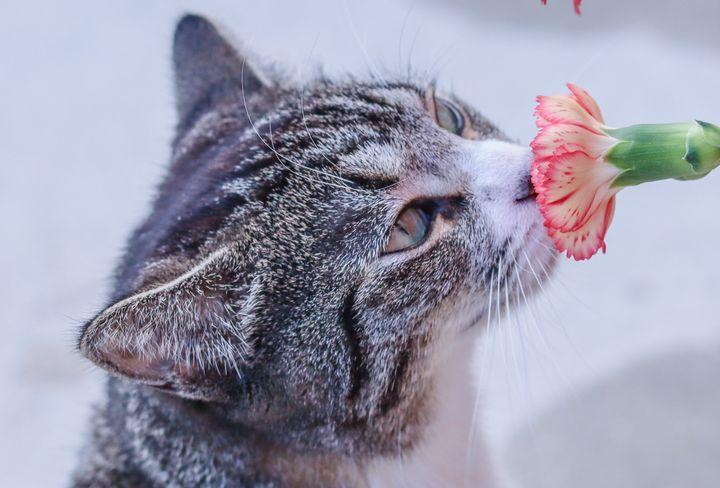 cat smelling flower - Preus Photography
