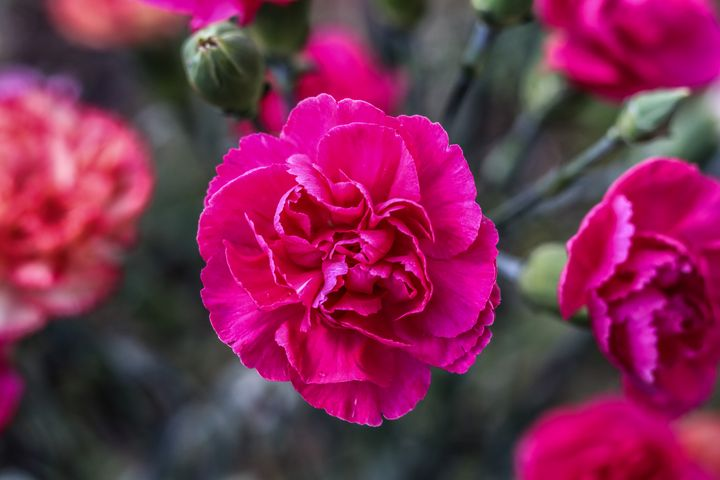 flower - Preus Photography