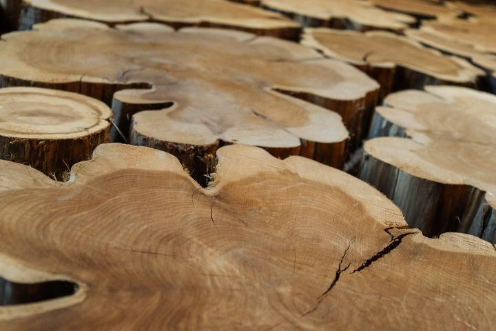 tree logs - Preus Photography