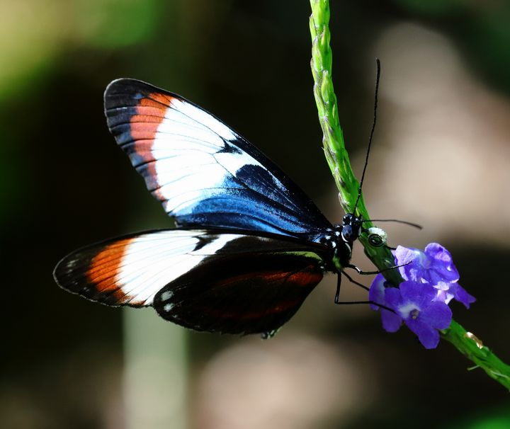 butterfly - Preus Photography