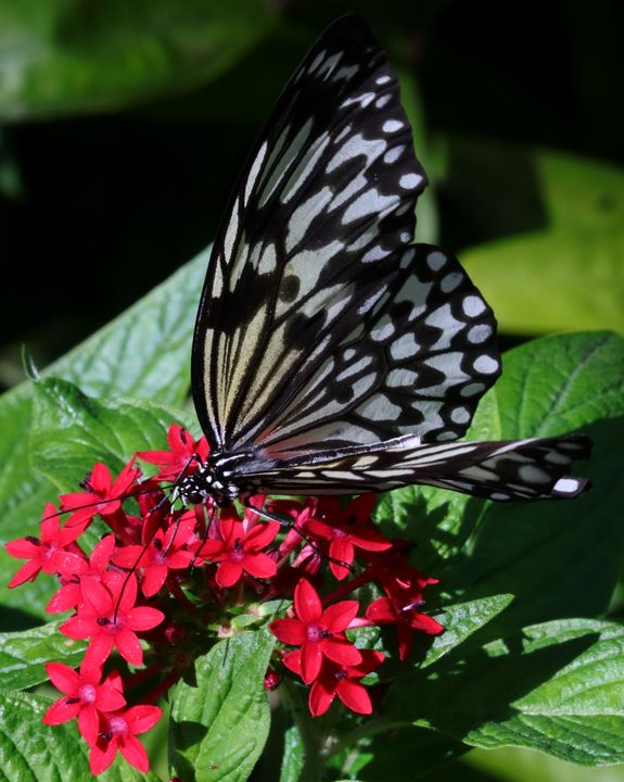 butterfly feeding - Preus Photography