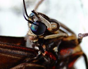 butterfly closeup - Preus Photography
